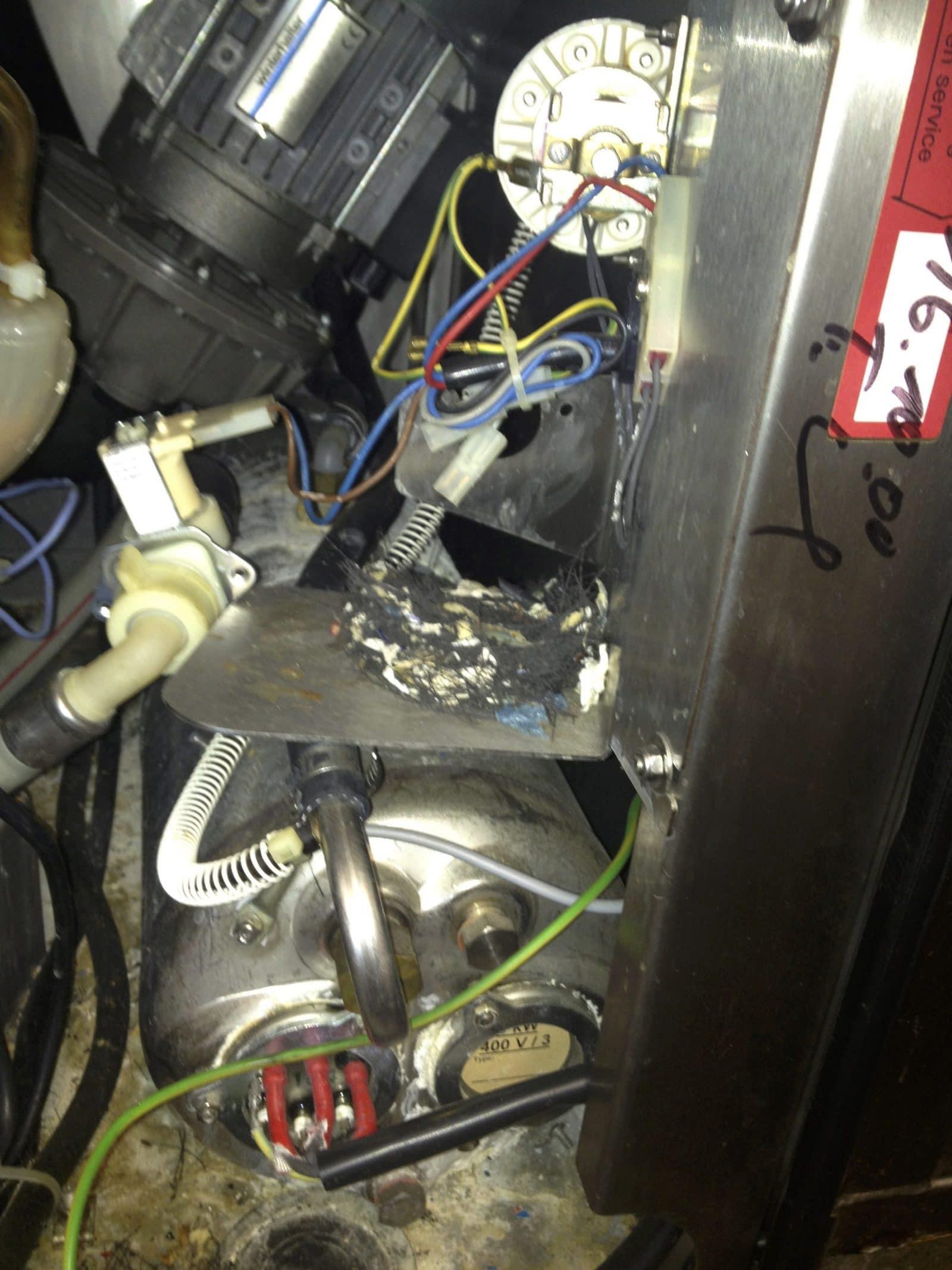 Maus vergnügt sich am Stromkabel
